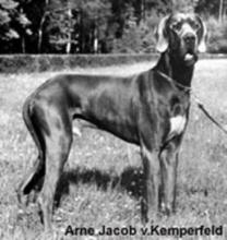 ARNE JAKOB v.Kemperfeld - Ch.CZ