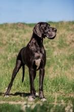 BROOKLYN Cassiopea Dog