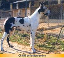 ELFI de la Benjamine - Ch.Fr