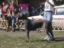 IRMA Dog-Lome - CIB, Ch.CZ, SK