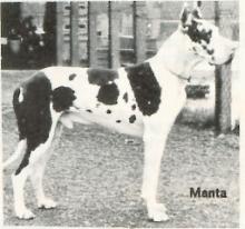 MANTA v.Harlekin