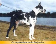 MYAKATLANE de la Benjamine - Ch.Fr.