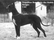 NAPOLEON BONAPARTE des Habits Rouges - Ch.Fr.