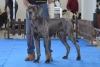 ALIEN Canis Cairus - JCh.A