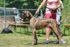 BALBINA Pretorian Dog - GCh.Cro, Ch.CRO, CZ, SK, JCh.SK