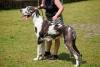 CRAZY Berta - dog