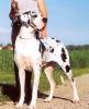 QUARTETT de la Zootaxie - Ch.DDC, VDH